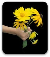 A handful of yellow daisies