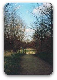 A path through autumnal trees