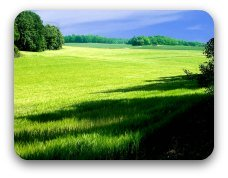 A broad sweep of sun-lit green pasture
