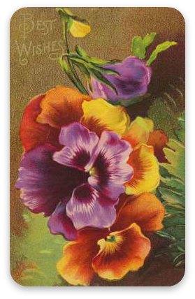 Vintage greeting card - pansies
