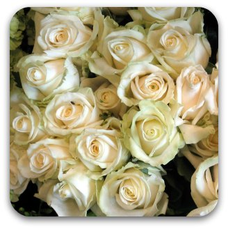 A bunch of creamy-pink roses