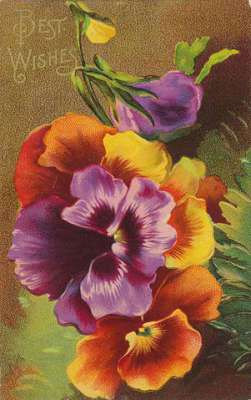 retro birthday card - pansies