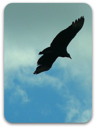 A bird soaring through blue sky.