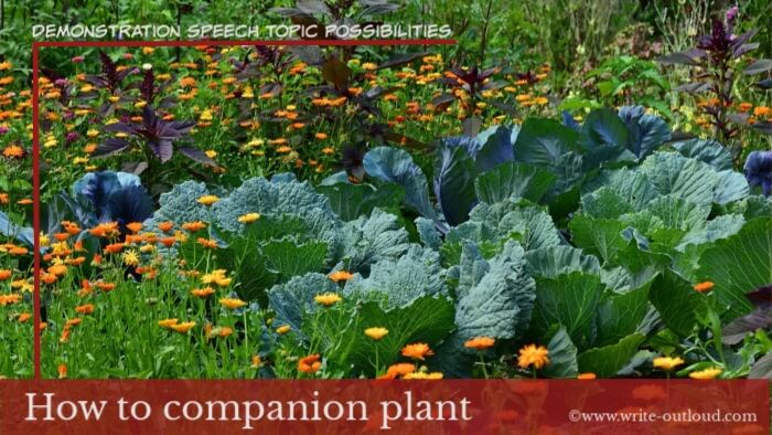Image: companion plants in vegetable garden. Text- Demonstration speech topic- how to companion plant.
