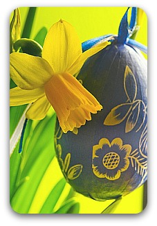 A yellow daffodil with a blue easter egg
