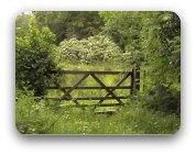 A rustic gate to a green field