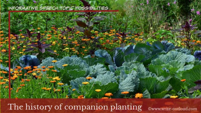 Image: cabbage planted with calendula Text: The history of companion planting