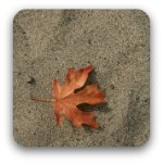 A lone maple leaf resting on sand
