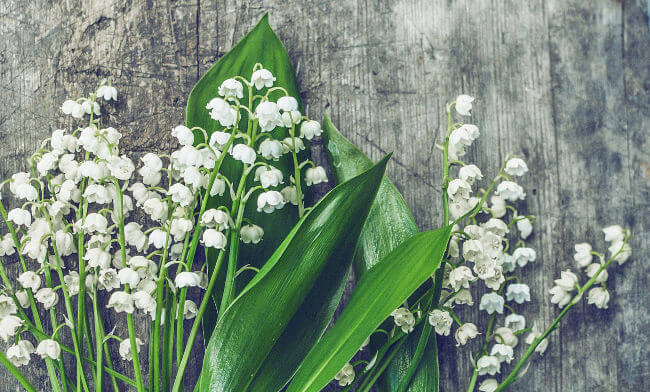 Lily of the valley - a flower frequently used in flowers for the bereaved.