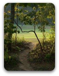 Path through trees in dappled shade