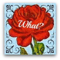 Red rose graphic. Text: What?