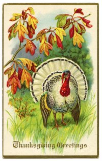 Vintage postcard of thanksgiving turkey