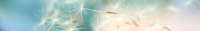 Image - dandelion seed heads blowing across clear sky.