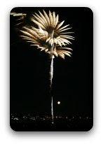Fireworks flowering in the night sky