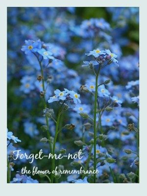 Blue forget-me-nots - the flower of remembrance