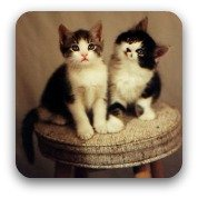 pair of kittens sitting on a stool