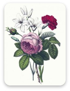 Vintage rose, lilies and carnations