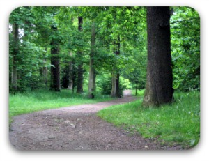 woodlandpath winding beneath trees